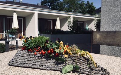 Ein Garten für das Leben im St. Vinzenz-Hospiz